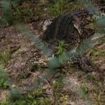 Экскурсия на крокодиловую ферму Ла Бока